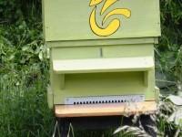 Les ruches du Paradoxe Perdu