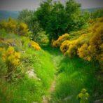 Randos nature au cœur de l'Ardèche sauvage
